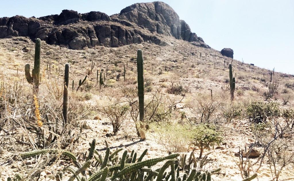 La Paz cactus - de reizigers