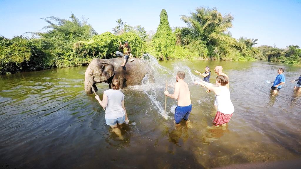 Olifanten wassen!