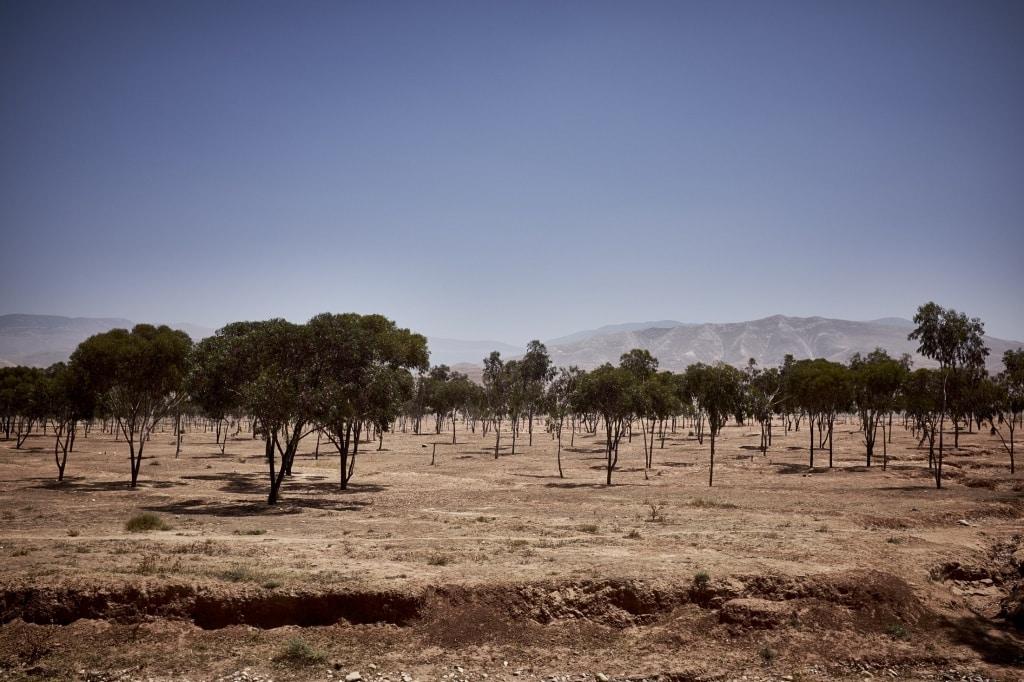 Marokko - De Reizigers - Road Trip -2