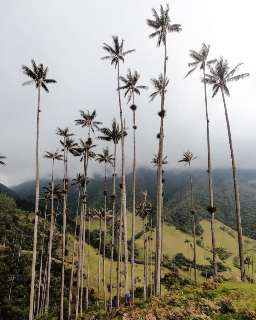 Heeele hoge palmbomen