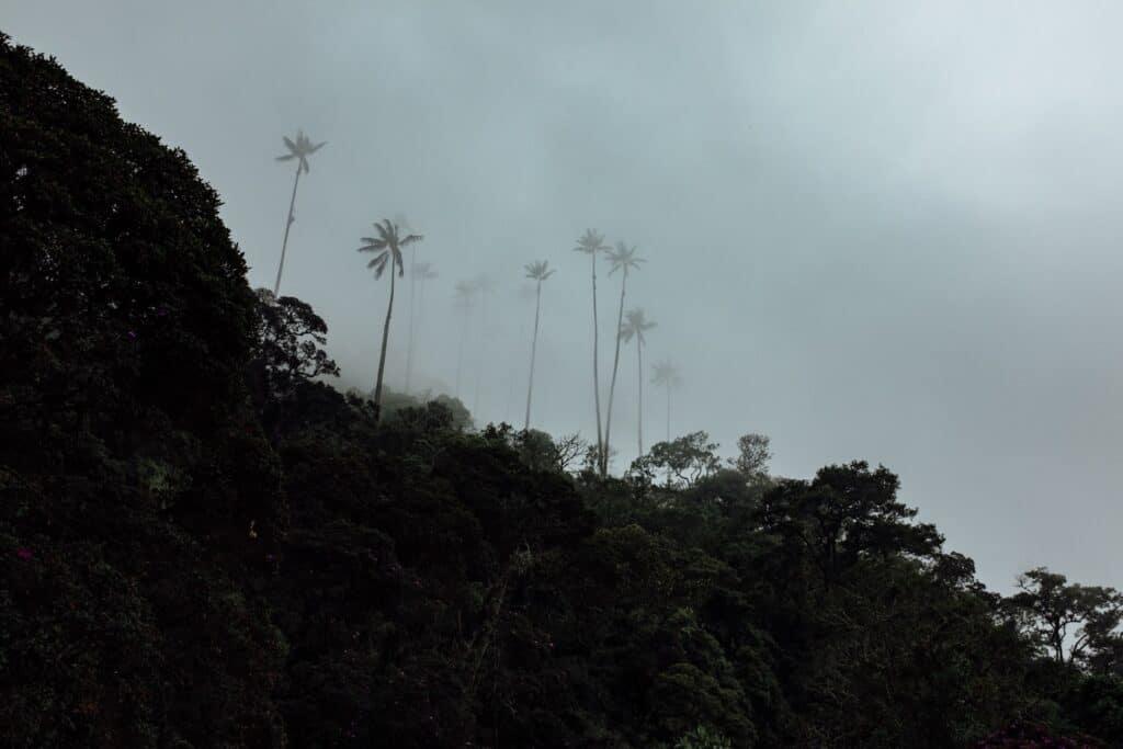 Eerste view van de palmbomen