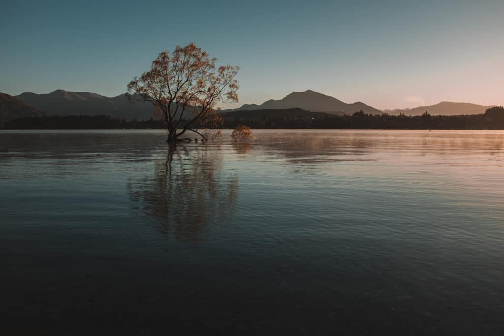 That Wanaka Tree - Nieuw-Zeeland