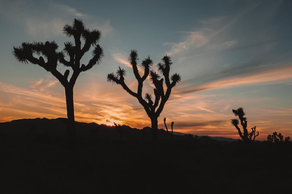 Zonsondergang in Joshua Tree National Park