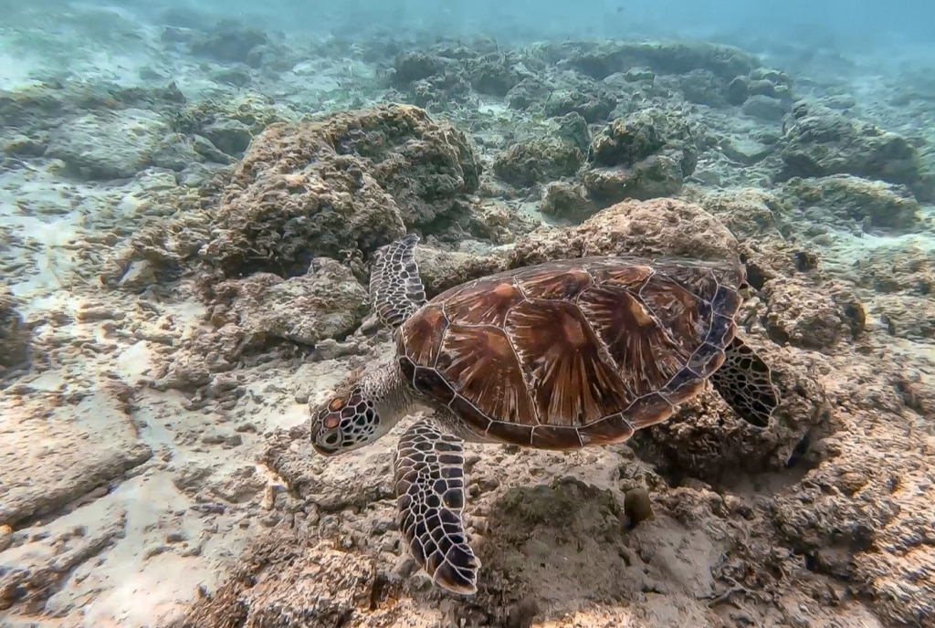 Schildpad op de zeebodem