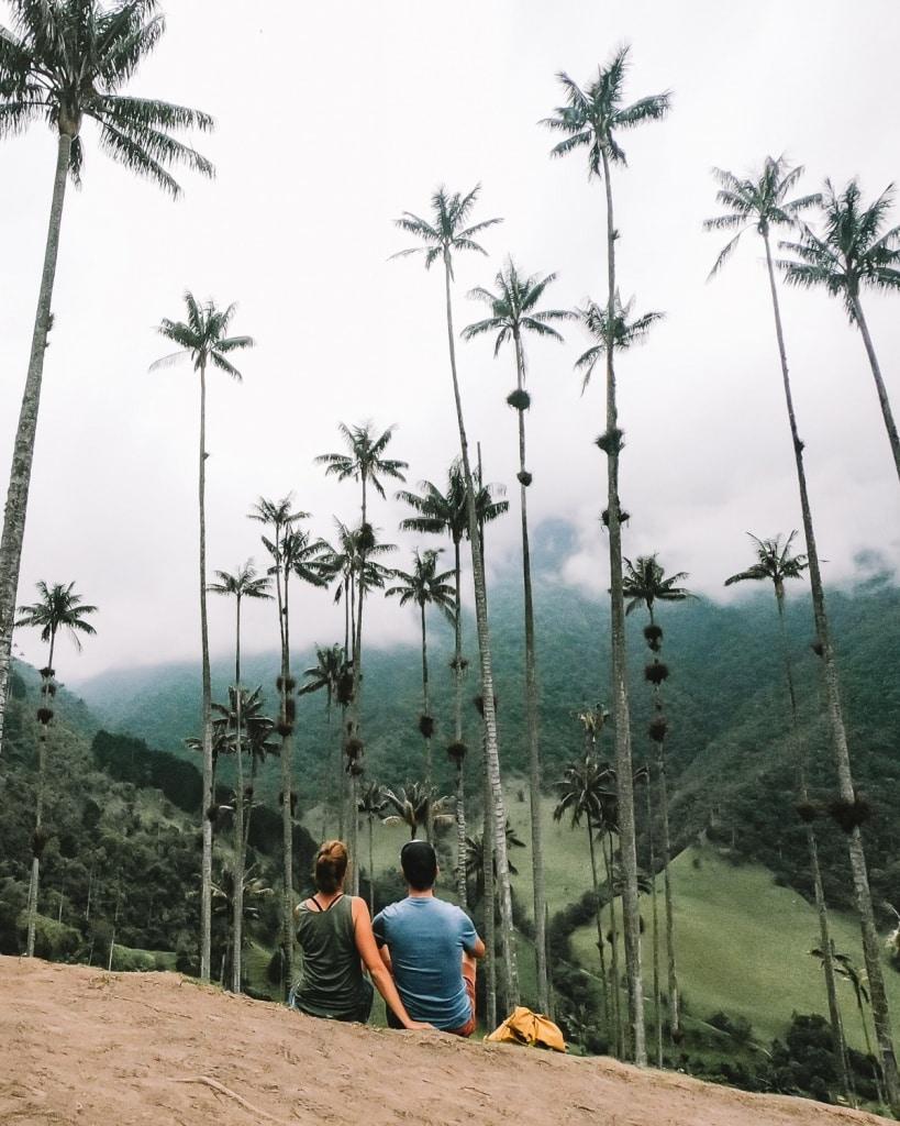 Must-see must-do: de hoogste palmbomen ter wereld