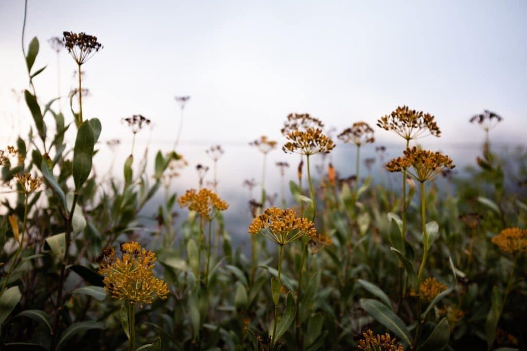 Bloemen langs de kant van de weg