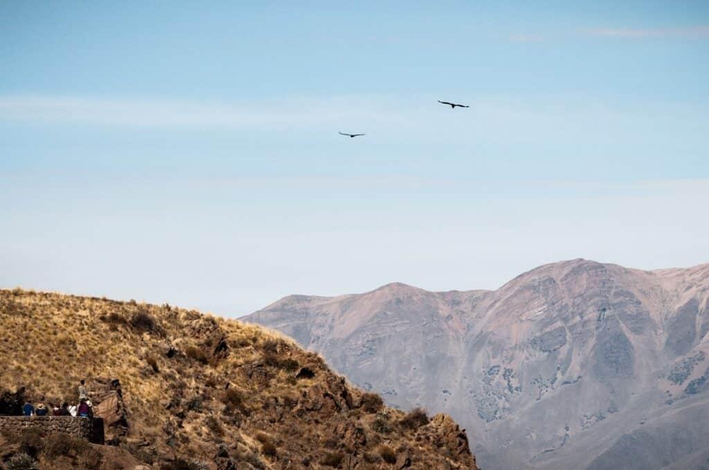 De Reizigers Colca Canyon Condors