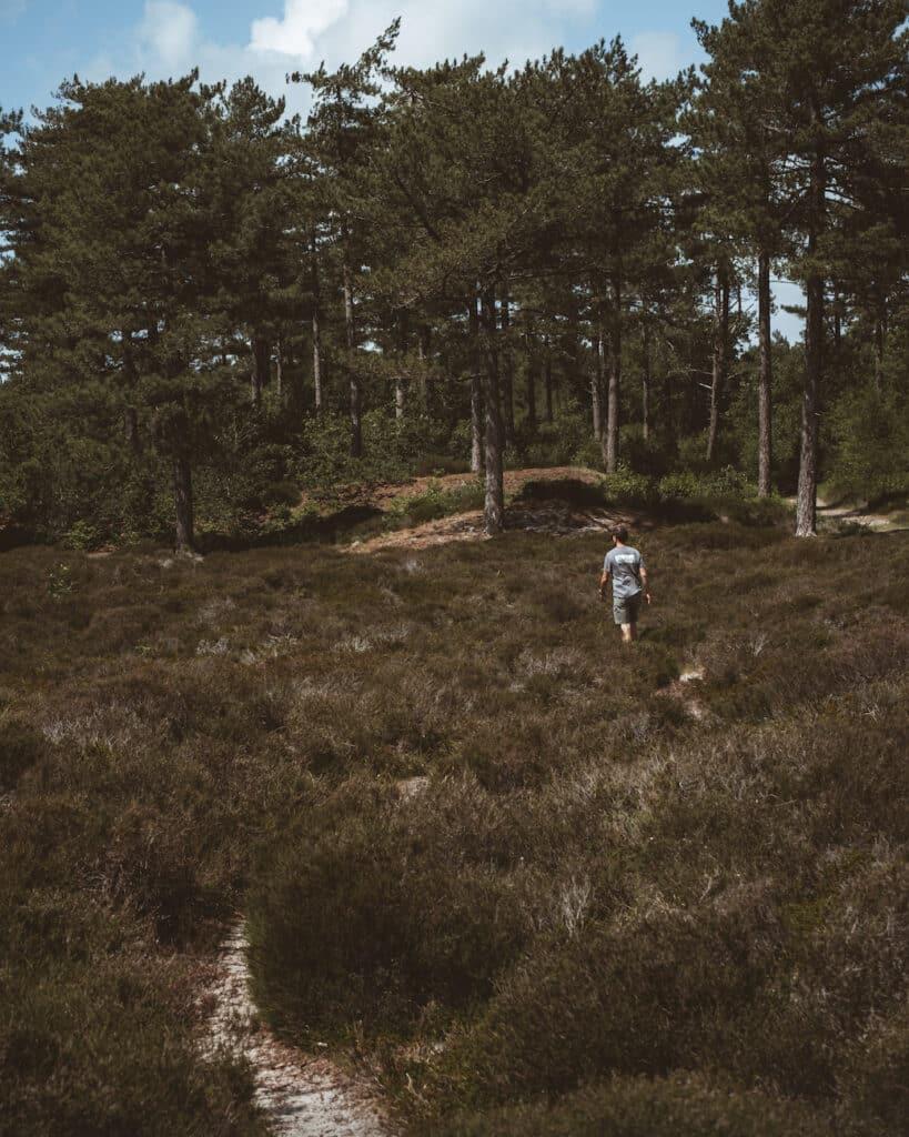 De Reizigers - Hike Schoorl- Bosgebied