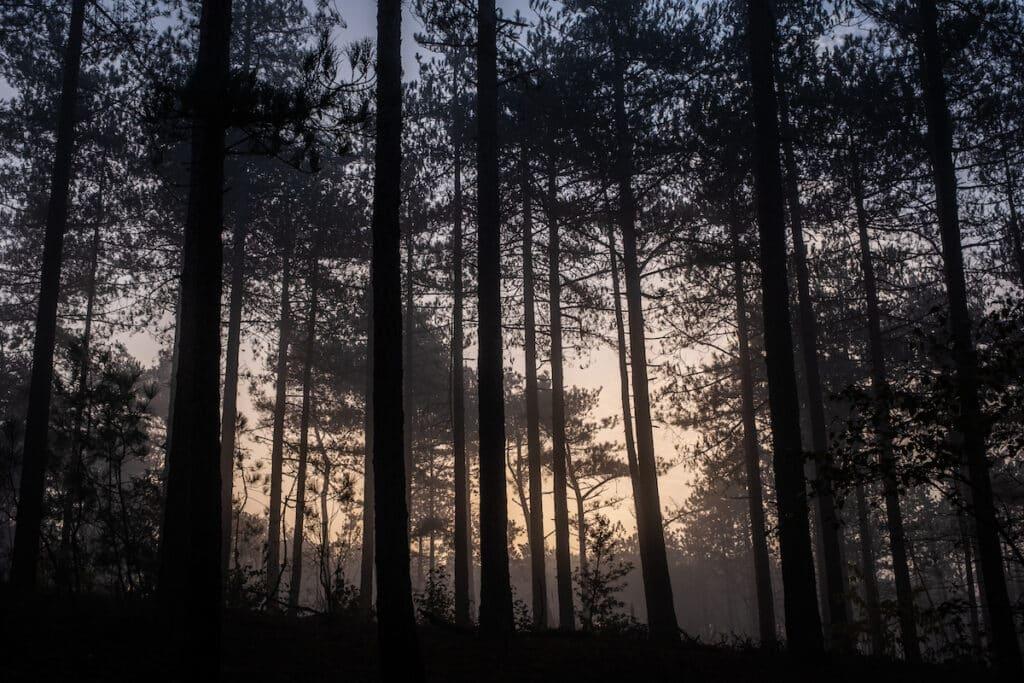 Schoorl - wandeling - zonsopkomst